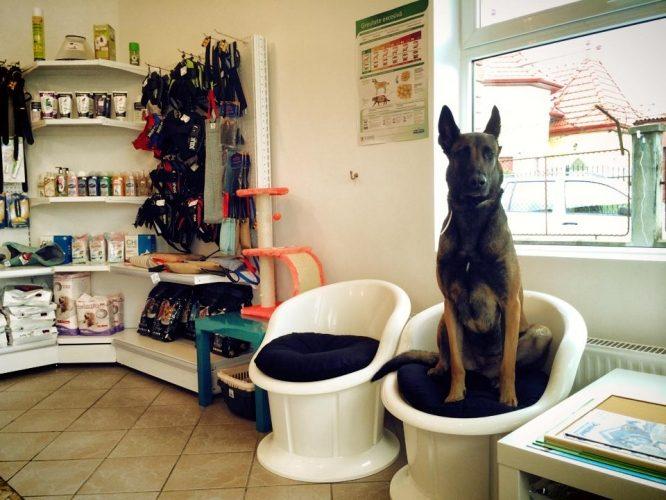 Cum alegi cabinetul medical potrivit pentru animalul tau de companie